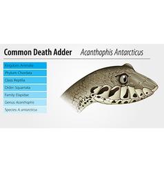 Death Adder vector image