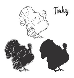 hand drawn turkey bird set vector image