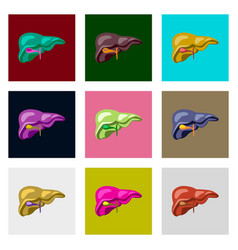 Icons set in flat style human organ liver vector