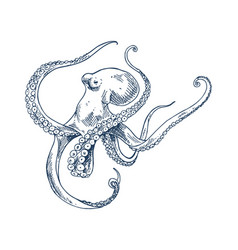 Octopus seafood monochrome vector