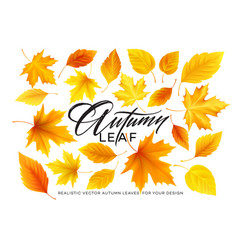 set realistic autumn yellow red orange leaves vector image