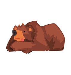 Sleeping brown bear cute wild forest animal vector