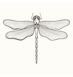 Hand drawn engraving Sketch of Dragonfly for vector image