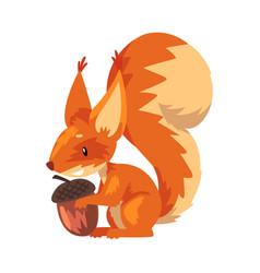 cute squirrel with acorn funny little orange vector image