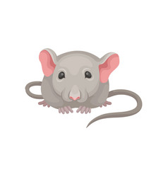 flat icon of little mouse front view gray vector image