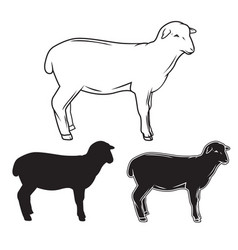 hand drawn sheep set vector image