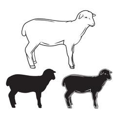 hand drawn sheep set vector image