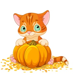 Harvest Kitten vector image