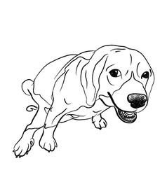 Pooping beagle vector