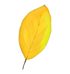 yellow leaf isolated on white background Digital vector image vector image