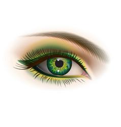female green eye vector image