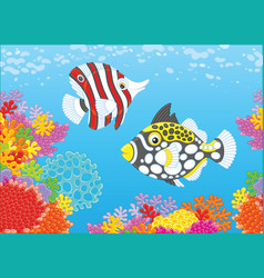 butterfly fish and triggerfish vector image