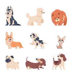 cartoon dogs retriever labrador husky puppies vector image