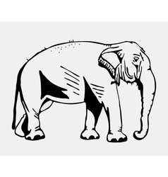 Hand-drawn pencil graphics elephant Engraving vector