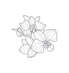 Orchid Flower Monochrome Drawing For Coloring Book vector