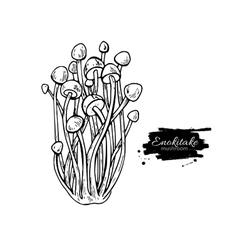 Enokitake mushroom hand drawn vector image vector image