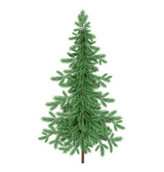 christmas green spruce fir tree isolated vector image