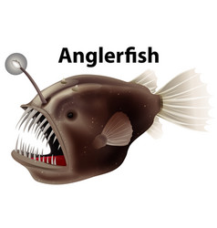 Flashcard design for anglerfish on white vector