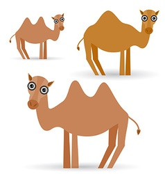 Funny camel on white background vector image