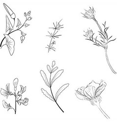 hand drawn flowers and leaf on white background vector image