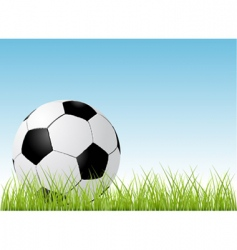 soccer ball and grass vector image