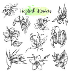 tropical flowers hand drawn bird paradise vector image