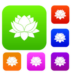 water lily flower set color collection vector image