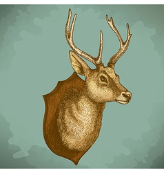 engraving deer head retro vector image