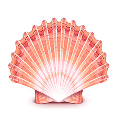 Beautiful shell isolated on white vector