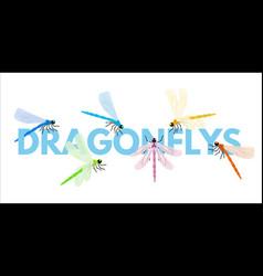 Dragonflies cartoon word concept banner vector