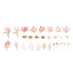 Elegant dry protea flower tropic palm pale vector
