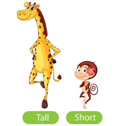 Opposite words with tall and short vector