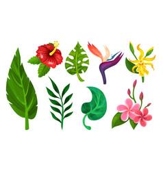 Tropical plants set different vector