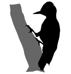 black silhouette of woodpecker vector image vector image