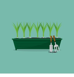 Green onions cultivating vector