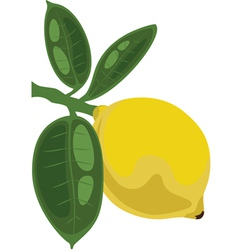 lemon on a branch with leaves vector image