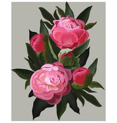 Realistic pink peonies flower vector
