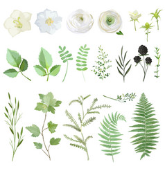 set green leaves and flowers vector image