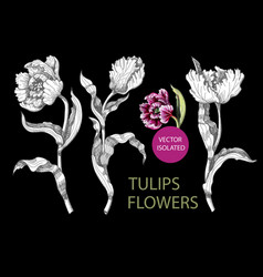tulips flowers drawing in different style vector image