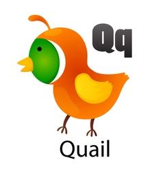 Alphabet Q with quail vector image