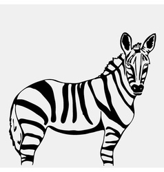 Hand-drawn pencil graphics zebra Stencil style vector