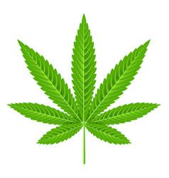Marijuana leaf isolated on white vector