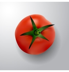 Tomato with rootlet top side vector