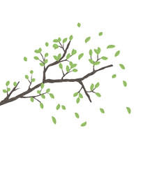 Tree branch with green leaves over white vector