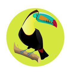 big bright toucan tropical bird vector image vector image