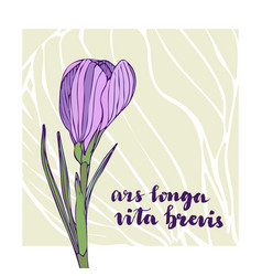 vintage greeting card with crocus flower and vector image