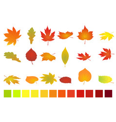 colorful autumn leaves isolated on white vector image