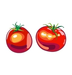big ripe red fresh tomato vector image