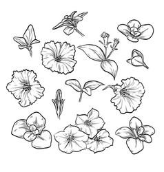 hand drawn elegant petunya vector image