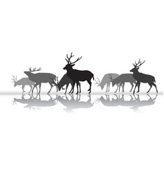 walking deers females silhouette with reflection vector image